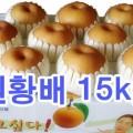 원황배 선물세트15kg (~17과)